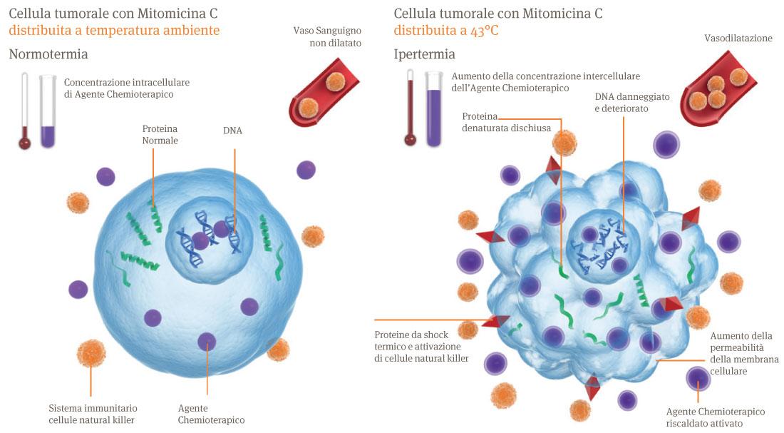 combat_cellule